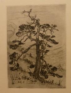 "Olaf Willums ""Skjærgårdsfuru""/23,5x33,2cm/kr. 500,-(fra mappe under)"